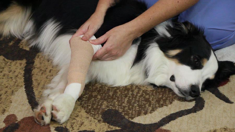 New Online Pet First Aid Course Launches