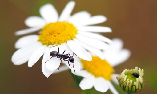 The Borax Way to Get Rid of Ants