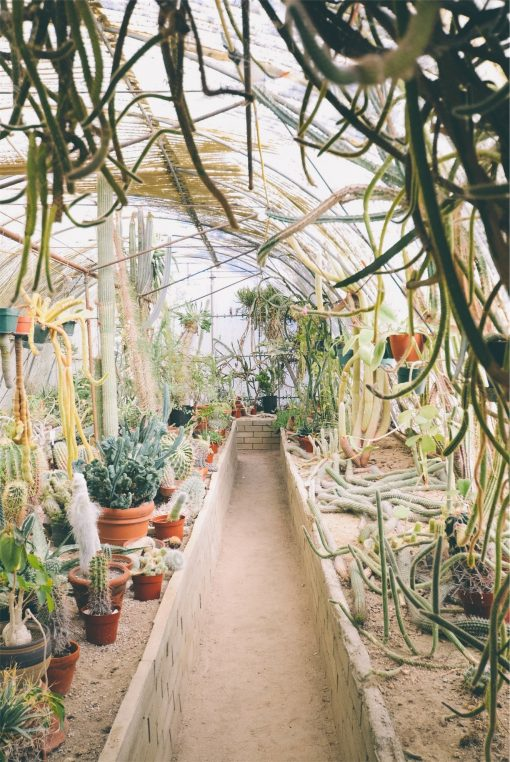 Why A Greenhouse is Your Best Gardening Option