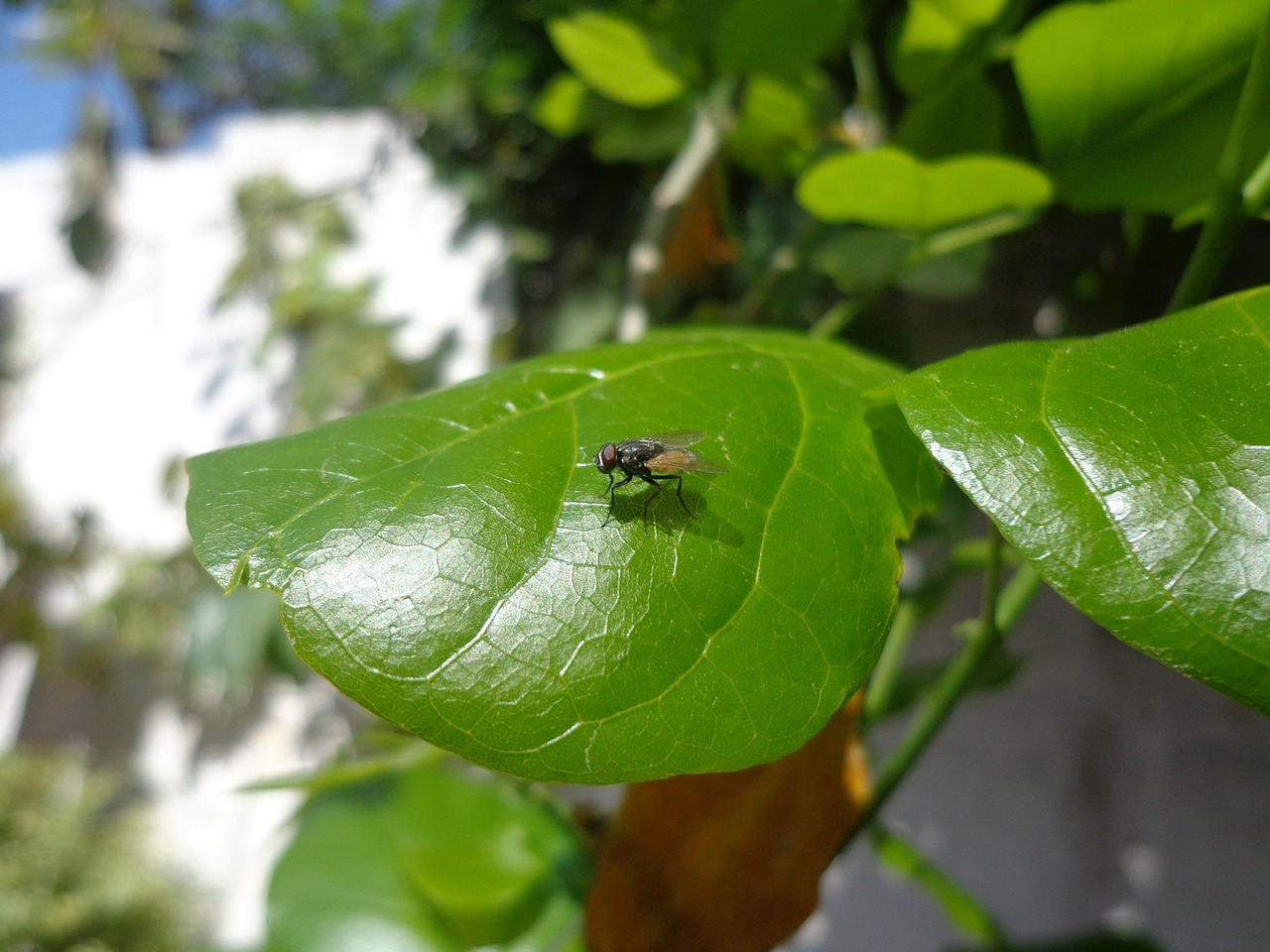 Cheat Sheet to Help You Tell Which Bug is Eating Your Plant