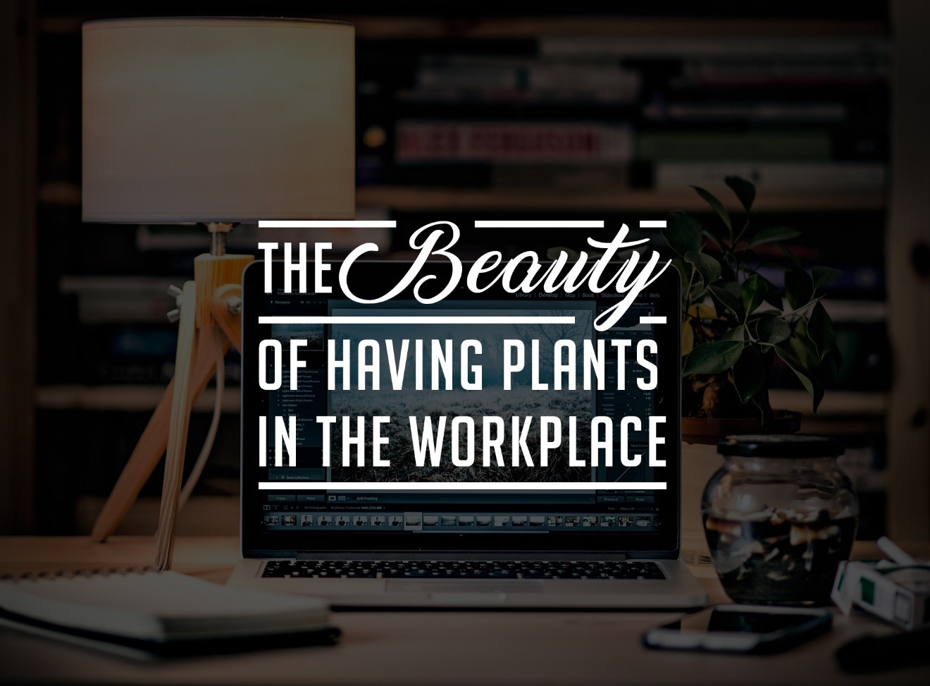 The Beauty of Having Plants in the Workplace