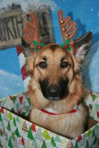 7 Ways to Keep Your Pets Happy & Healthy for the Holidays