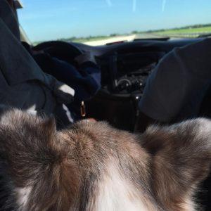 Life With a Camera-Shy Dog