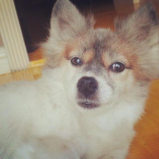 camera shy dog