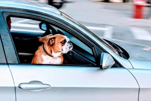 Traveling with Pets: Top 5 Tips