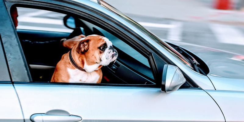 Traveling with Pets Top 5 Tips