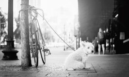 How to Living in the City with a Pup