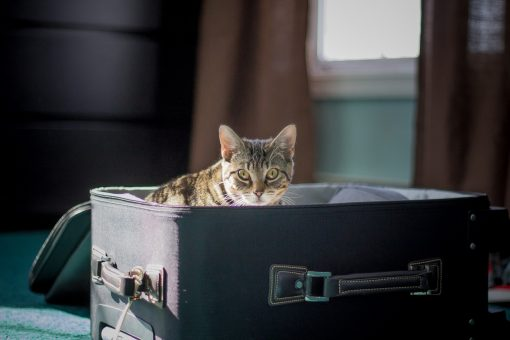 Traveling with Your Pets at Universal Orlando Resort