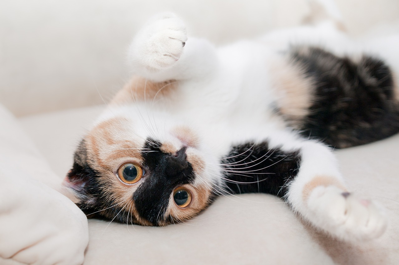 September 29 is Cat Day. Freshpet is helping celebrate!