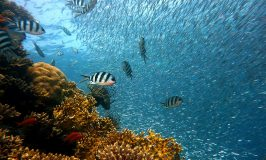 5 Colorful Fish you will see Snorkeling the Mexican Caribbean!