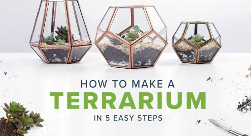 How to make a terrarium in 5 Easy Steps by North Carolina Lifestyle Blogger Champagne Style Bare Budget