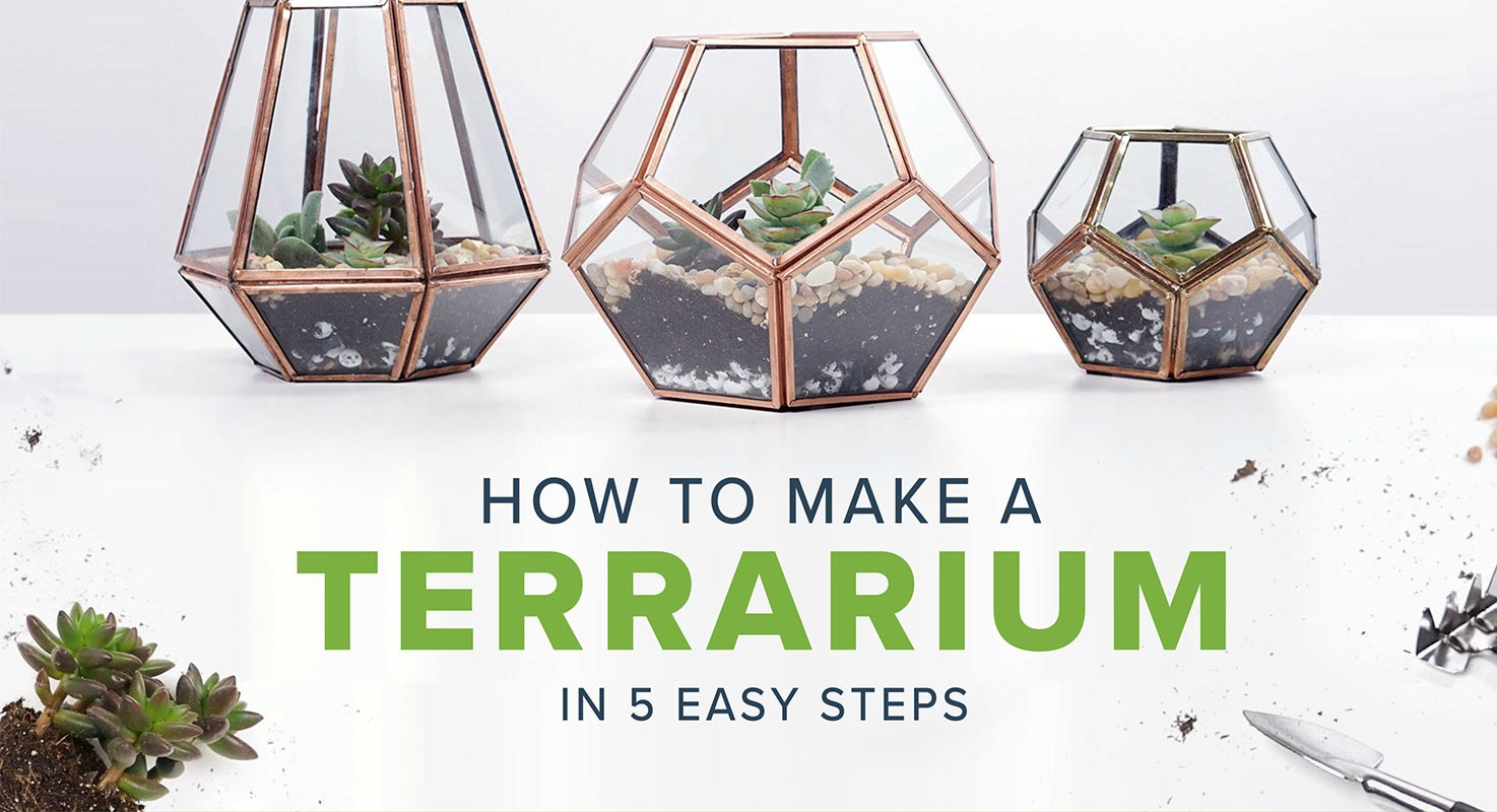 How to Make a Terrarium in 5 Easy Steps
