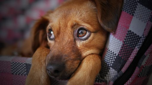 Warning Signs of Canine Cancer You Should Know About