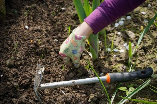 Some Important Garden Maintenance Tips