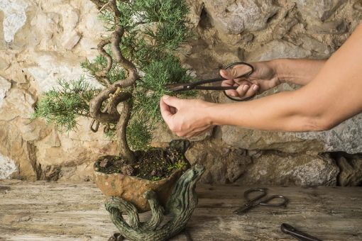 How to Buy the Right Bonsai Tools for Your Balcony or Rooftop Garden