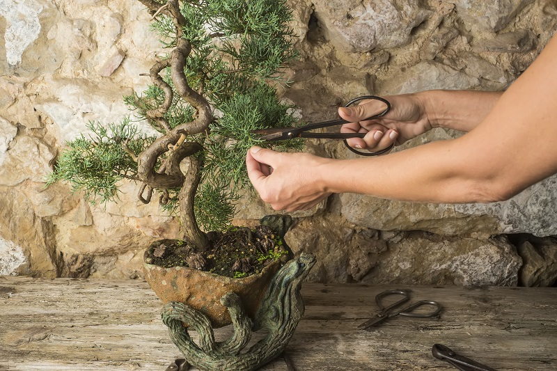 How to Buy the Right Bonsai Tools for Your Balcony or Rooftop Garden from North Carolina Lifestyle Blogger Champagne Style Bare Budget