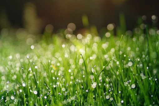 10 Popular Types of Grasses to Plant
