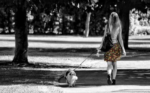 Safety Tips for Dog Walkers from North Carolina Lifestyle Blogger Champagne Style Bare Budget