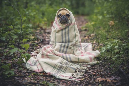 How to Protect Your Pets Before, During and After the Storm