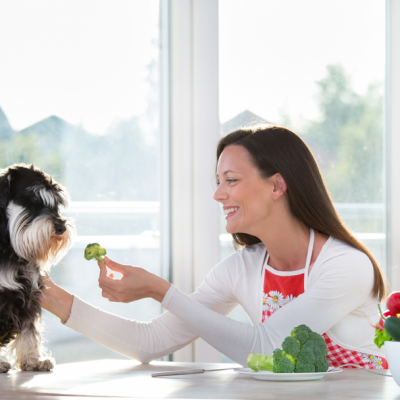 Essential Guide to Your Dog's Ideal Diet