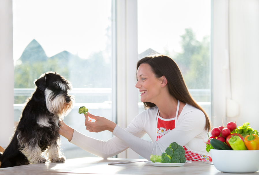 Essential Guide to Your Dog's Ideal Diet from North Carolina Lifestyle Blogger Champagne Style Bare Budget