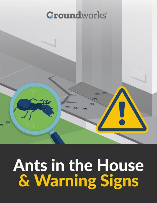 Are You Dealing With an Ant Infestation from North Carolina Lifestyle Blogger Champagne Style Bare Budget
