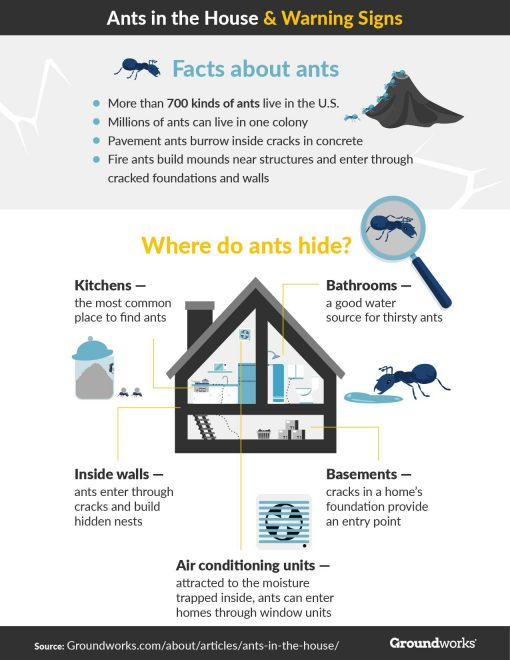 Are You Dealing With an Ant Infestation from North Carolina Lifestyle Blogger Champagne Style Bare Budget 2
