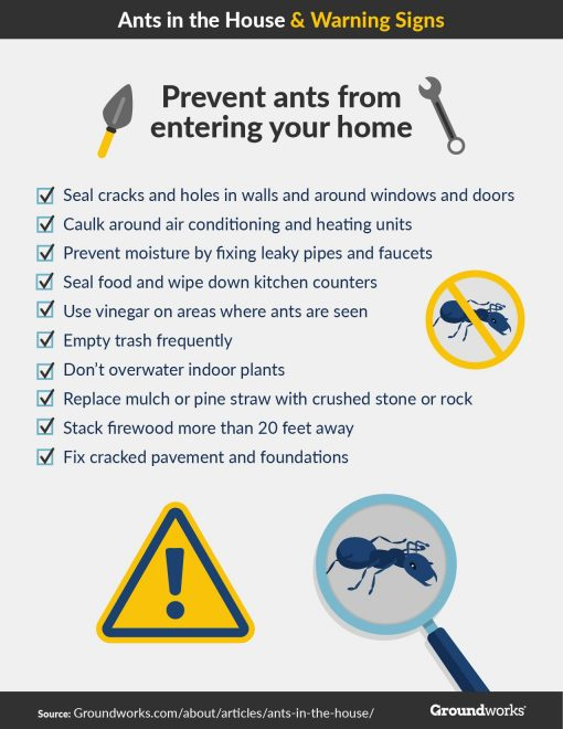 Are You Dealing With an Ant Infestation from North Carolina Lifestyle Blogger Champagne Style Bare Budget 3