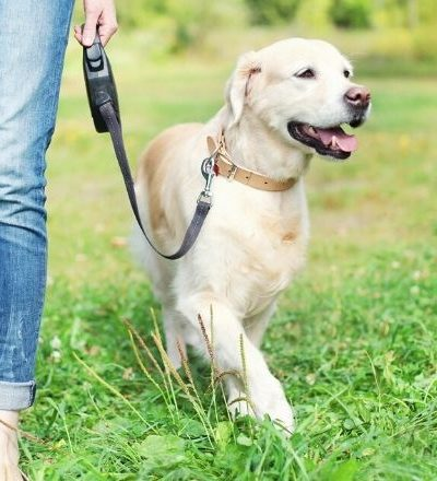 The Ultimate Side Hustle: 3 Essential Tips for Dog Walkers
