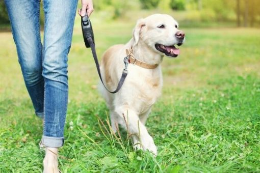 The Ultimate Side Hustle: 3 Essential Tips for Dog Walkers from North Carolina Lifestyle Blogger Champagne Style Bare Budget