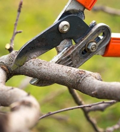 Why Trimming Your Tree Helps It Flourish
