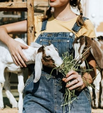 Crucial Tips for Starting a Hobby Farm