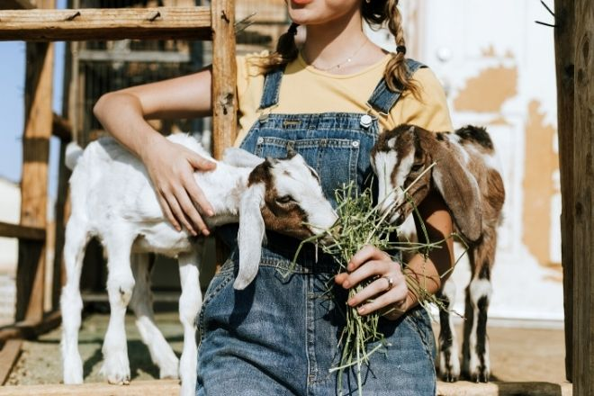 Crucial Tips for Starting a Hobby Farm from North Carolina Lifestyle Blogger Champagne Style Bare Budget