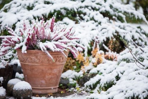 Ways To Enjoy Your Garden in Cold Weather
