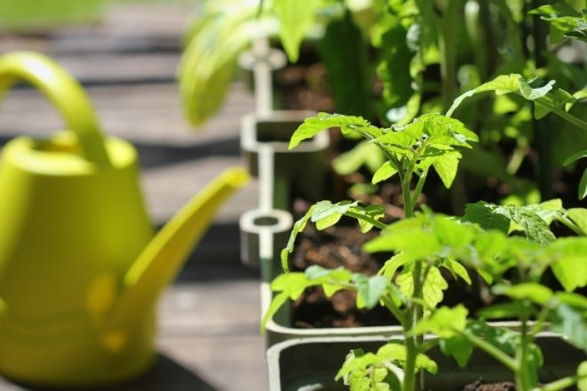 Tips for Starting a Home Garden