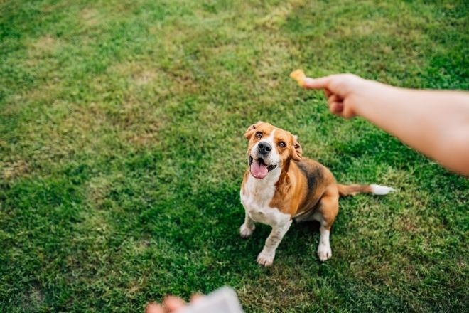 3 Important Tips Before Adopting a Dog